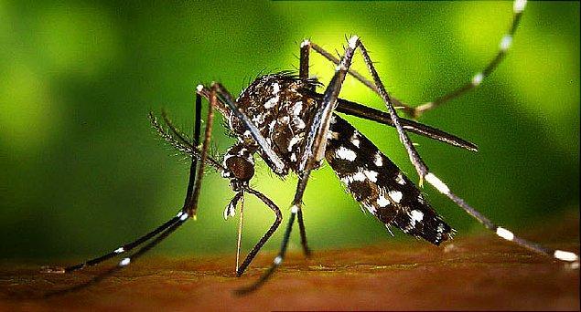 4. Zika virüsünün insanlarda beynin normal gelişimini engelleyen mikrosefali hastalığına sebep olduğu kanıtlandı.