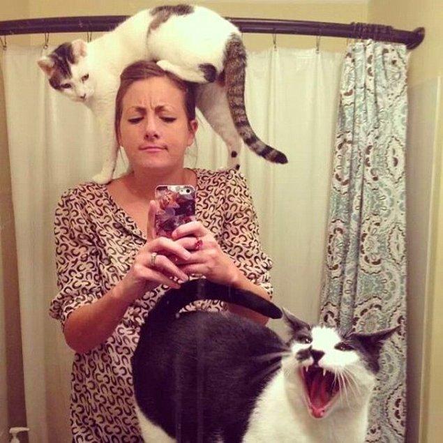 Kedi sahibi olmak aslında psikolojik bakımdan tamamen itaat edebilmekle doğru orantılıdır desek yanlış olmaz.