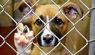 Koca Yüreklerinizle Sadece İnsanları Değil Hayvanları da Doyurabileceğiniz 30 Barınak