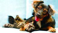 Onların da Bir Hakkı Olduğunu Unutmayalım: Sokak Hayvanları İçin Neler Yapabiliriz?