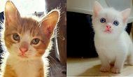 Biraz Neşelenelim! 2016'yı Daha Güzel Bir Yıl Yapan Akıllara Zarar 28 Minnoş Kedi