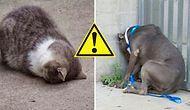 Kedi ve Köpek Ebeveynleri Dikkat! Yavrunuzu Hemen Veterinere Götürmenizi Gerektiren 15 Durum
