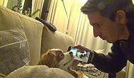 Yüksek Sesle Horlayan Köpeğinden Kendi Horlamasıyla İntikam Alan Adam