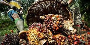 Severek Yediğimiz Birçok Şeyin İçinde Bulunan Palm Yağı ile Alakalı İlginç Bilgiler