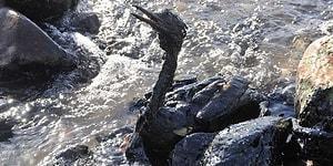 Kocaeli'nde Çevre Felaketi: Petrol Tankeri Sızıntı Yaptı, Kuşlar Telef Oldu...