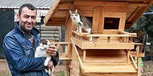 'Mandıra Filozofu'ndan Etkilendiler, Arabalarını Satıp Türkiye'nin İlk Kedi Köyünü Kurdular