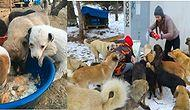 Köpekleri Doğal Ortamda Besleyip Kalbimizi Isıtan Güzel İnsanların Parkı: PatiPark Ankara!