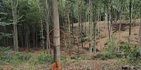Belgrad Ormanı'nda 'İşaretlenen Ağaçlar Kesilecek' İddiası Sosyal Medyada Tartışılıyor