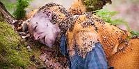 Masum Görünseler de Her Yıl Örümcek ve Yılanlardan Daha Çok İnsan Öldüren Canlılar: Arılar