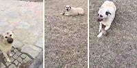 Ölü Yavru Köpeği Annesinin Kolları Arasında Görünce Göz Yaşlarına Hakim Olamayan Kadın