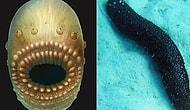 Günümüze Dek Korunmuş Olmasıyla Bilim İnsanlarını Şaşırtan 540 Milyon Yıllık Anüssüz Fosil