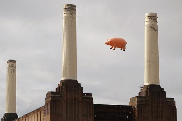 Çalışmaya ara verildi ve ertesi gün herkes yine tam yerlerine geçti. Bu kez domuzun şişmesi tamamlandı, çeşitli kabloların yardımıyla yavaşça binanın üstünde uçmaya başladı.