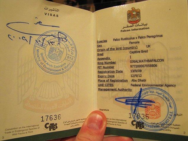 2002 ve 2013 yılları arasında Birleşik Arap Emirlikleri'nde 28.000'den fazla şahine pasaport çıkartıldı.