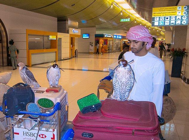 Qatar Airways bir kabinde en fazla 6 kuş cinsi yolcuya izin veriyor.