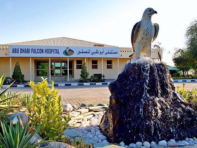 BAE'de bu kuşlara bakmak o kadar önemli ki Abu Dhabi'de her türlü altyapıya sahip bir şahin hastanesi bile var.