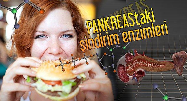 6. Pankreastaki enzimlerin görevlerini saysak bitmez. Bizim için önemi büyük