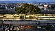 Doğaya Saygının Adresi Japonya: 700 Yıllık Ağacı Kesmek Yerine İstasyonu Yeniden Planladılar!