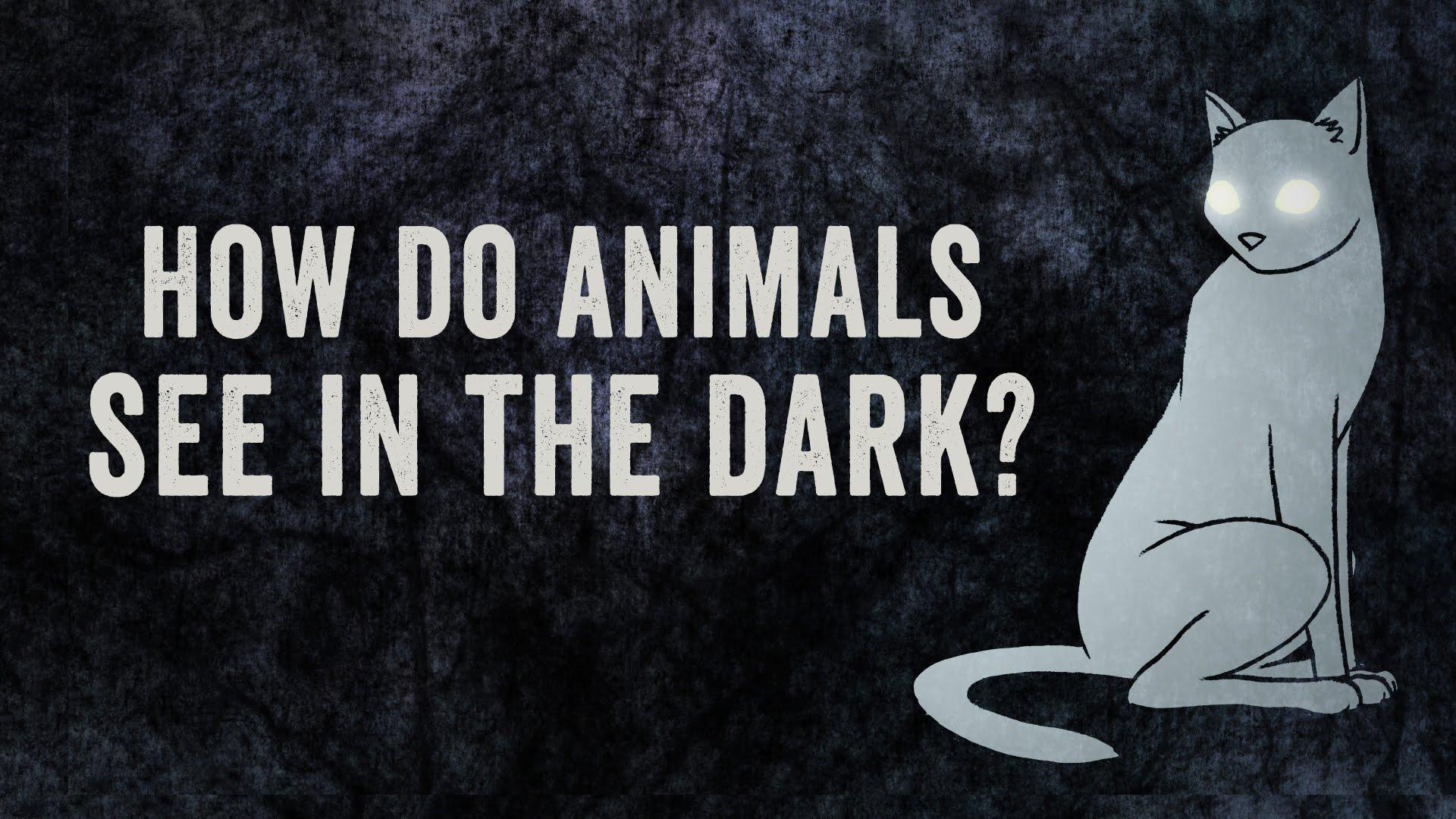 Hayvanlar nasıl görürler