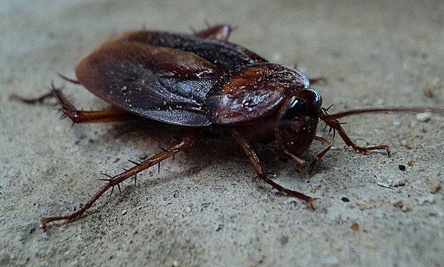Kadının beynine doğru ilerleyen hamamböceğinin oldukça tehlikeli olduğunu, öyle sanıyorum ki söylemeye gerek yok.