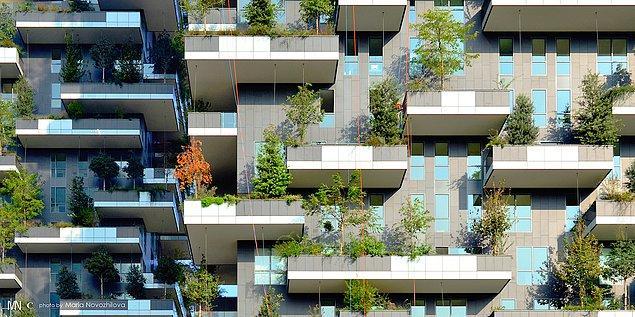 İsviçre'de Lozan kenti için tasarlanmış bir kule orman projesi bulunuyor.