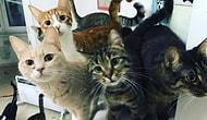 49 Hayvana Annelik Yapan Burçin'in Desteğe İhtiyacı Var