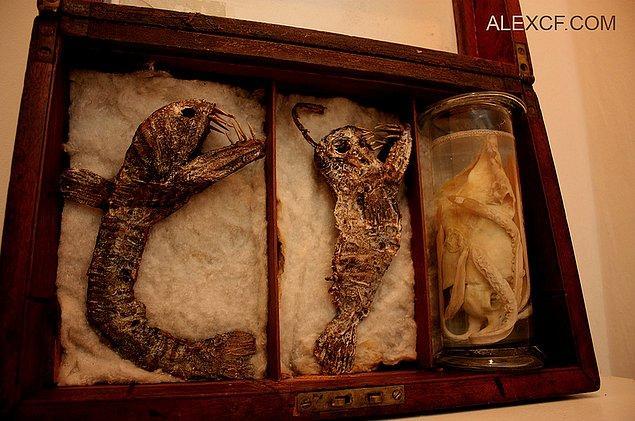 8. Ürkütücü bir deniz canlısının iskeleti