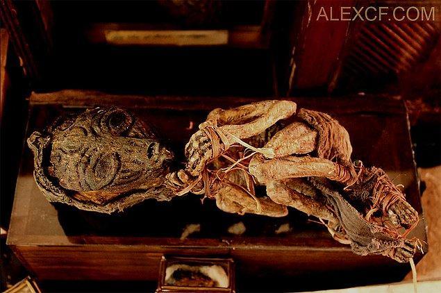 11. Yeni doğmuş bir vampir iskeleti