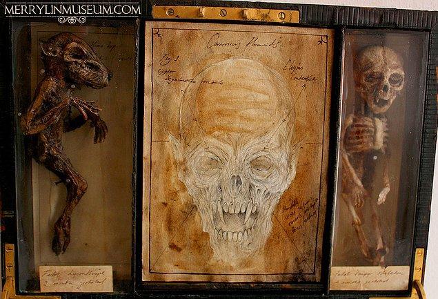 16. Yeni doğmuş kurtadam iskeleti, anatomik bir çizim ve yeni doğmuş bir vampir iskeleti
