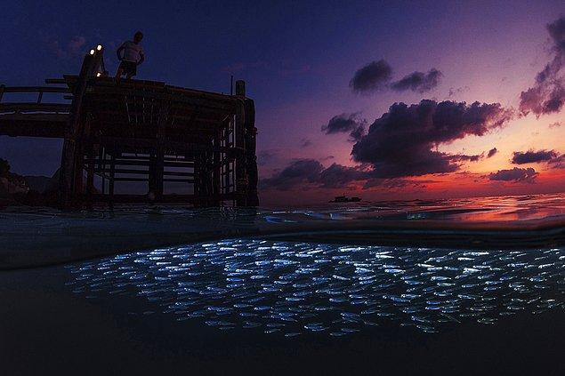 17. Günbatımında gümüş balıkları.