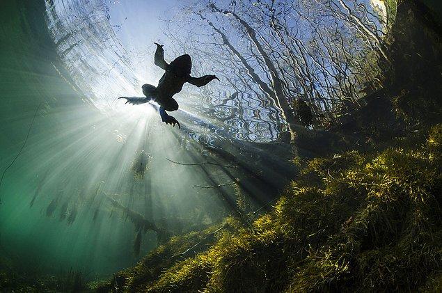 24. Nehiryatağında bir kurbağa.