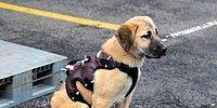 O Şimdi Stajyer İtfaiye Eri: Kuyu, Kurtarma Köpeği Olarak Yetiştirilecek!