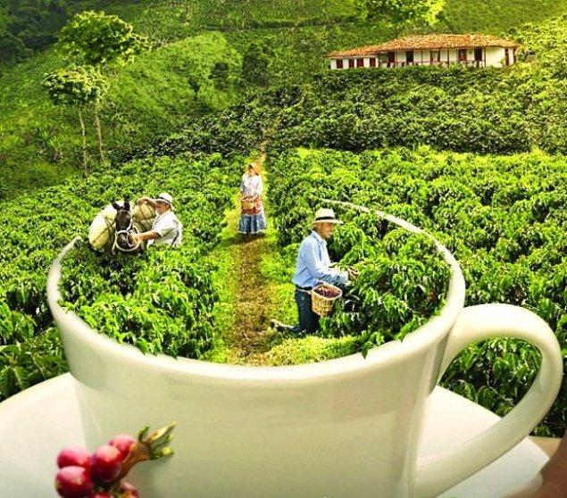 En güzel örneklerinden biri de Kolombiya'dır.