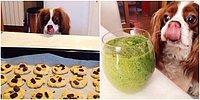 Bu Dünya Tatlısı Köpeğin Hangi Fotoğrafta Bir Yiyeceğe Baktığını Bulabilecek misin? 😋