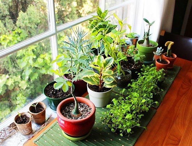 1. Bitkilerinizi/çiçeklerinizi sodayla ya da içine seltzer tableti attığınız suyla sularsanız daha hızlı büyürler ve renkleri de belirginleşir.