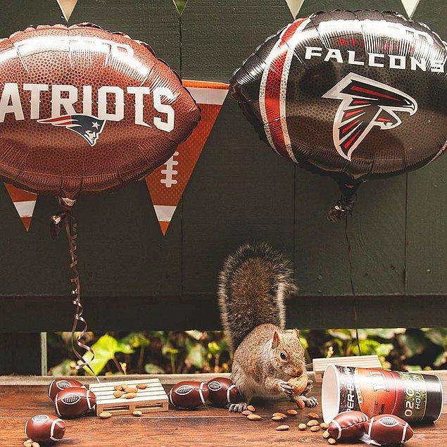 Yine de biz Deskins'in harika bir iş ortaya çıkarttığını düşünüyoruz. Sincaplar Super Bowl partilerine katılabiliyor ve yiyeceklerden atıştırabiliyorlar.