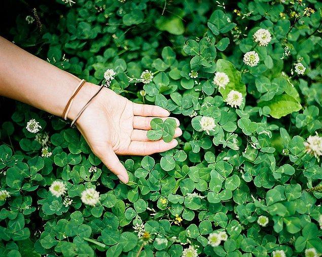 4. Dört yapraklı yonca mı buldun! E mükemmel bir haberdi bu!