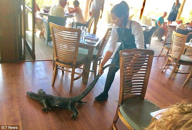 Pazar günü yaşanan olayın kahramanı 25 yaşındaki bu kadın timsah terbiyecisi falan değil; Mimosa Şarap Evi'nde çalışan Fransız asıllı bir garson.