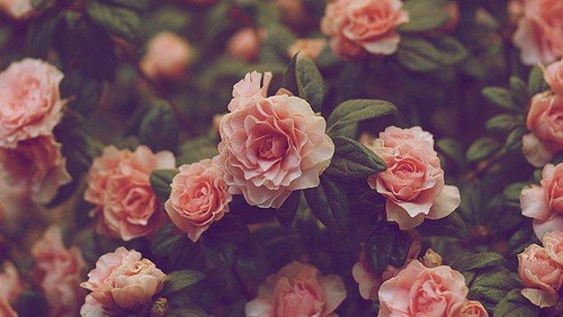 2. Bu çiçek görselinde ilk dikkatini çeken ne oldu?