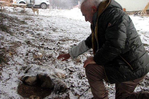 Böyle güzel haberlerin yanında gelen birkaç üzücü haber de var. Havaların aşırı soğuk olması sebebiyle bazı şehirlerden başta yavrular olmak üzere donmuş köpek haberleri medyaya yansıyor.