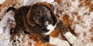 Kedi ve Köpek Sahiplenenlerin Üstüne Patilerini Basacağı 12 Tüylü Durum