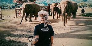 Seyahat Etmenin Yeni Yolu: Fil Dostlar İçin Gönüllü Çalışmak