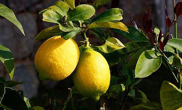 1. Limon:  Rumca