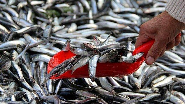 Tavuk ile balık fiyatı yükseldi. Özellikle fazla tüketilen hamsi ve istavrit fiyatındaki artış dikkati çekti.