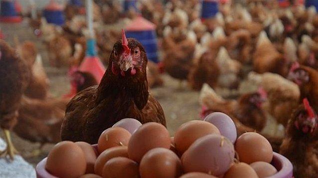 Yumurta fiyatındaki artış bu ay devam etti.