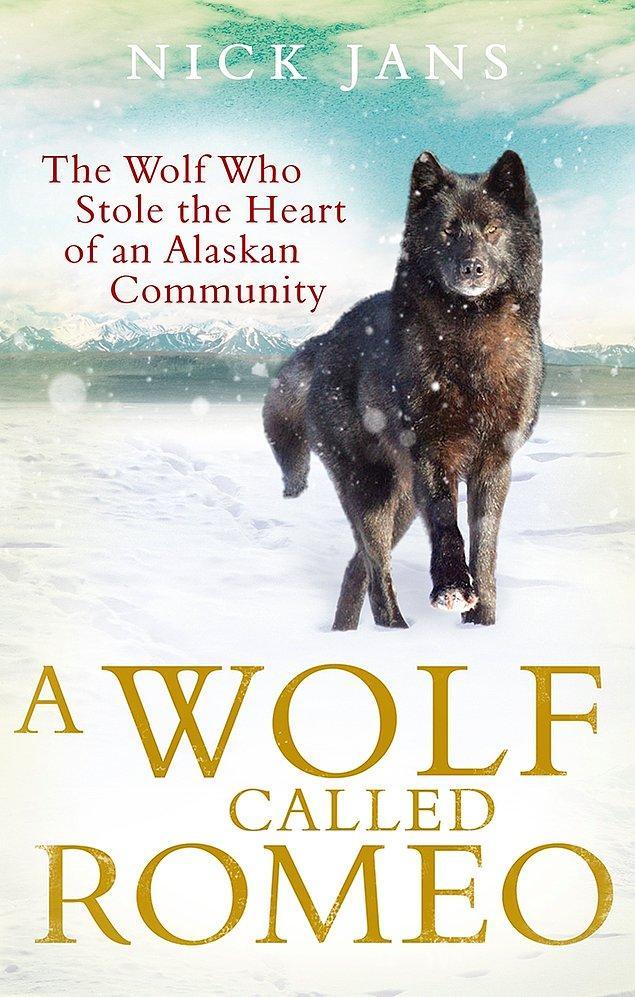 Nick, daha sonra hayatını değiştiren kurt hakkında bir kitap yazmaya başladı: Romeo adlı Kurt.