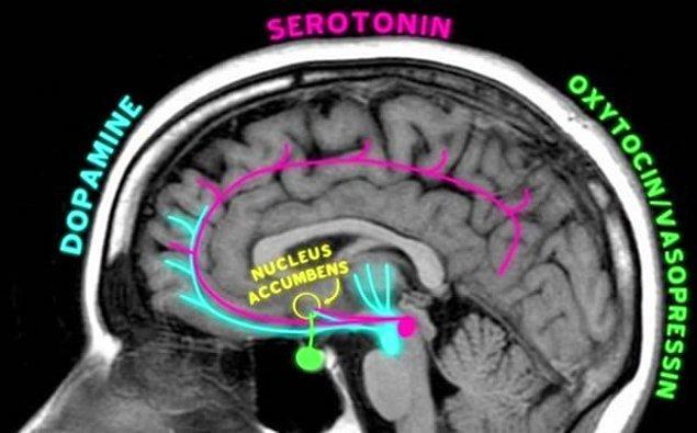 Son yıllarda beynin hareket halindeyken izlenmesi yöntemiyle, aşkın mekaniğine dair yeni fikirler de ortaya çıkmaya başlamış.