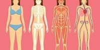 Bu Basit Anatomi Testinde 10/10 Yapabilecek misin?