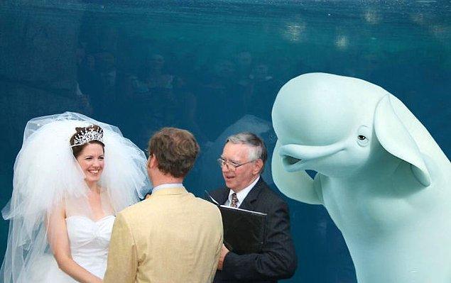 """2. Ben """"düğün"""" deyince başlayın. Düğün!"""