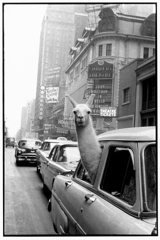 """16. """"Times Meydanı'nda bir Lama"""""""