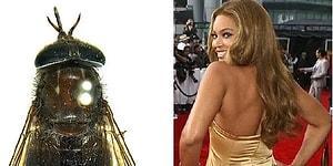 Örümceğinden Kurbağasına Kadar Pek Çok Hayvana İsmini Vermiş 15 Ünlü